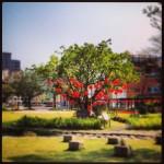Hakka Cultural Park & Treasure Hill